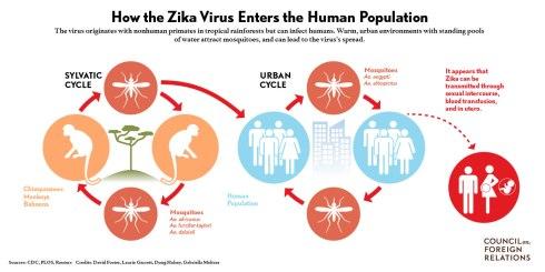 Zika_virus_final2